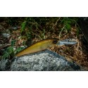 Wobler Majorcraft Zoner Jerk Bait 70 SP Brown
