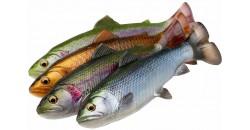 Pstruzi 4D Line Thru Pulsetail Trout
