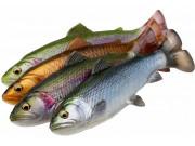 4D Line Thru Pulsetail Trout